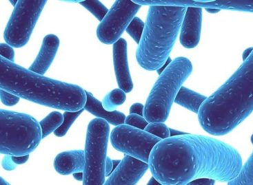The role of Probiotics for a healthy life