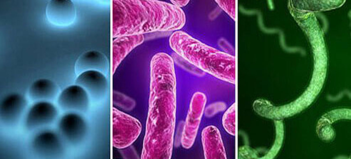 How can you protect yourself from bacterial infections of the stomach?