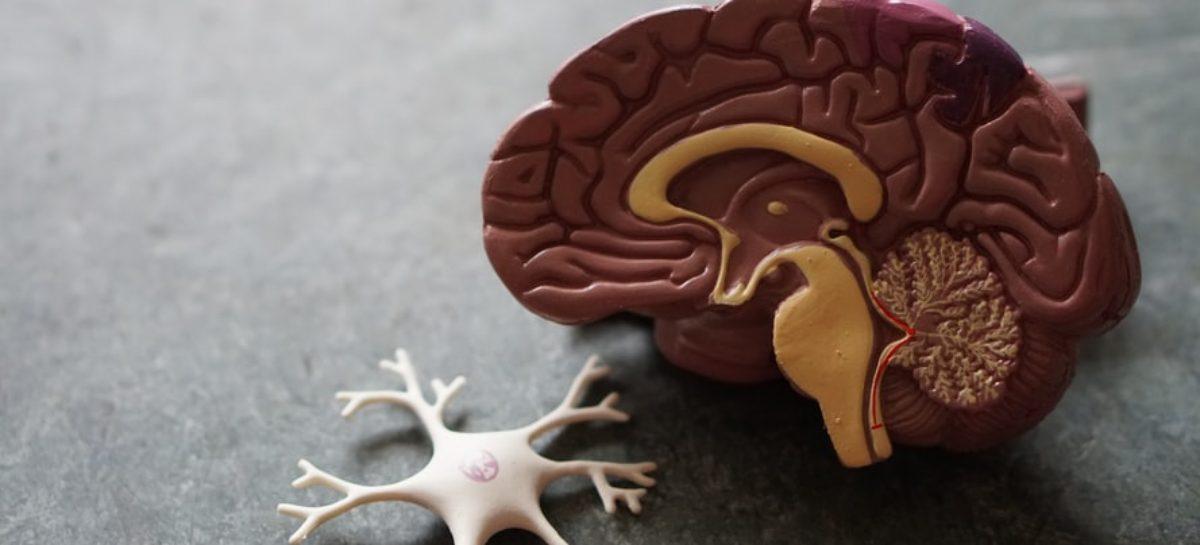 Cerebral Venous Thrombosis – Symptoms and Treatment